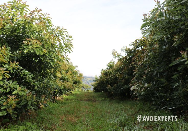 Westfalia Fruit farms are proud to be part of a rich heritage focussed on conservation and nurturing the environment.