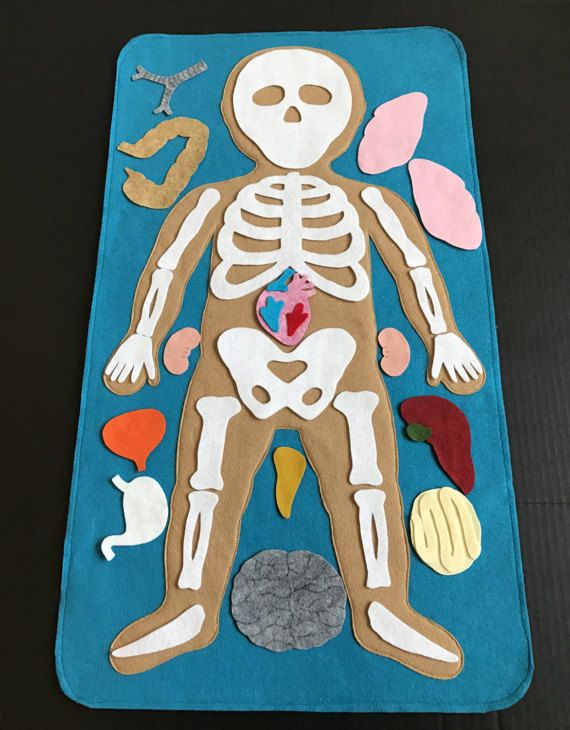 Educational Felt Human Anatomy/ Parts of the Body/