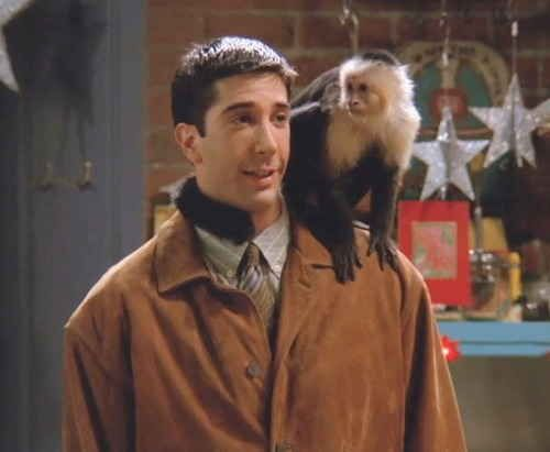 MARCEL  Because his BFF was a monkey named Marcel: | 24 Reasons Why Ross Geller Is The Best