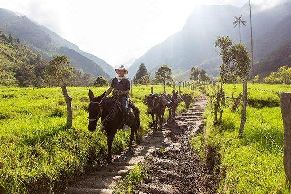 Cocora Valley, Colombia - Nathan Legiehn Photography