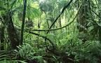 jungle Google definition an area of land overgrown with dense forest and tangled vegetation, typically in the tropics. text example The nursery was silent. It was empty as a jungle glade at hot high noon. (paragraph 2)  my example i would love to live in the jungle