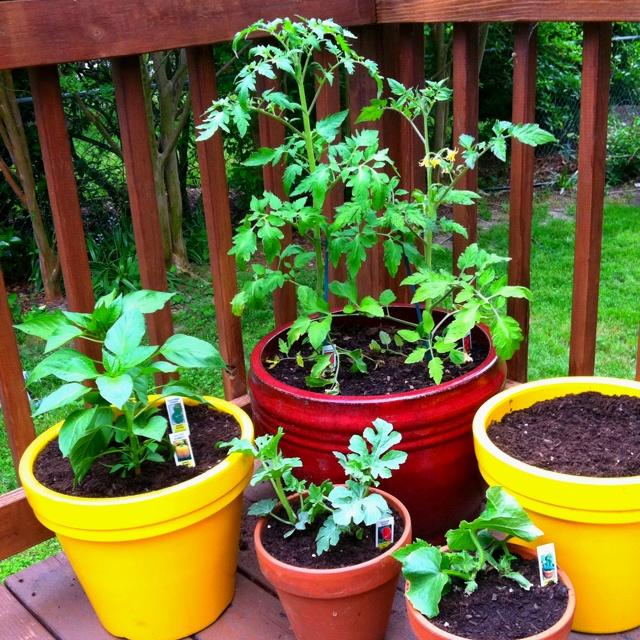 Vegetable garden in pots