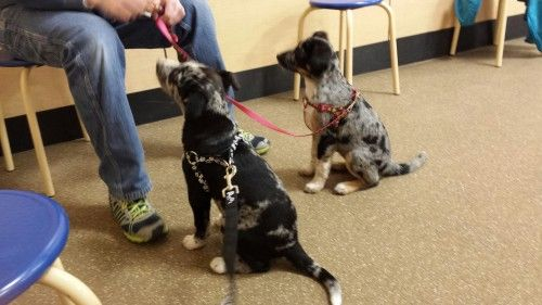 PetSmart Puppy Training Class - biting, niping, chewing, barking and jumping.  All can be resolved with one sound and a touch - something amazing our PetSmart trainer taught us in our first class!