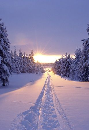 Tracks in the snow at sunset in Solberget, Lapland, northern Sweden