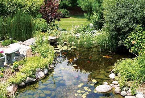 36 best garden life images on pinterest backyard ideas for Ornamental fish pond design