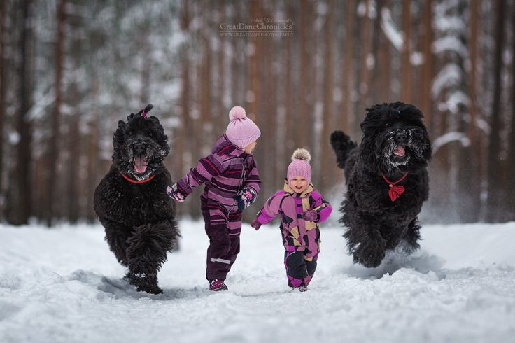 Black Russian Terrier in Action by Andy Seliverstoff on 500px