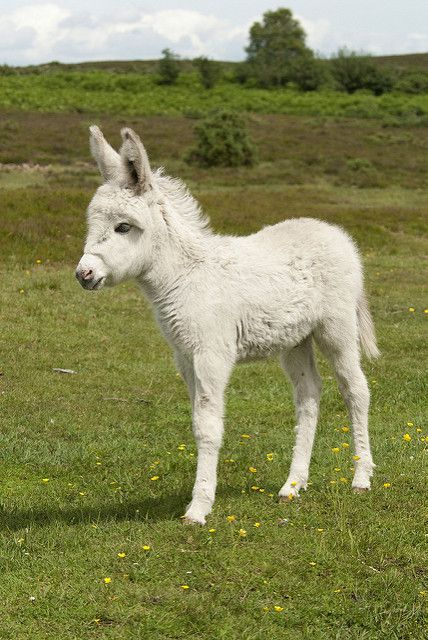 13th February Baby White Donkey
