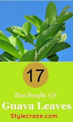 17 Best Benefits Of Guava Leaves  | Guava Health + Skin Benefits @purefiji