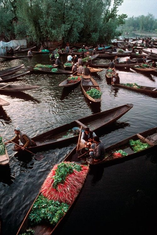 Dal Lake, Srinagar, Kashmir, 1999  Scores of shikaras laden with fruits and vegetables jostle for space on Dal Lake as farmers transact the early morning business of Srinagar's wholesale produce market. Some farmers tend floating gardens: They weave stalks of water plants into a living offshore raft, cover it with soil, and put in crops.