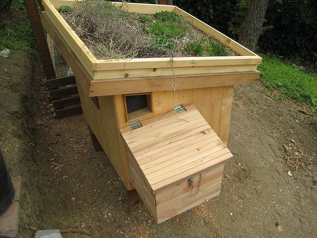 Green roof on the chicken coop for insulation! And awesomeness! Nest box addition on the coop by GreenFrieda, via Flickr