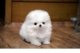 강아지 - Google 검색