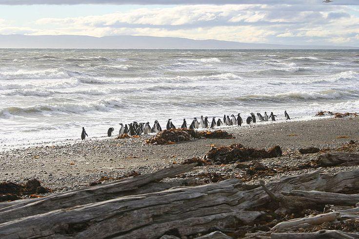 El Seno Otway (52°53′S 71°07′O) es una de las tantas entrantes del Océano Pacífico ubicada en la Región de Magallanes y la Antártica Chilena, se extiende entre la Península de Brunswick y la Isla Riesco, a 65 Km al noroeste de Punta Arenas y además conectado con el Seno Skyring por el Canal Fitz Roy. Tiene una colonia de 60.000 pingüinos magallanicos. Chile es.wikipeda.org