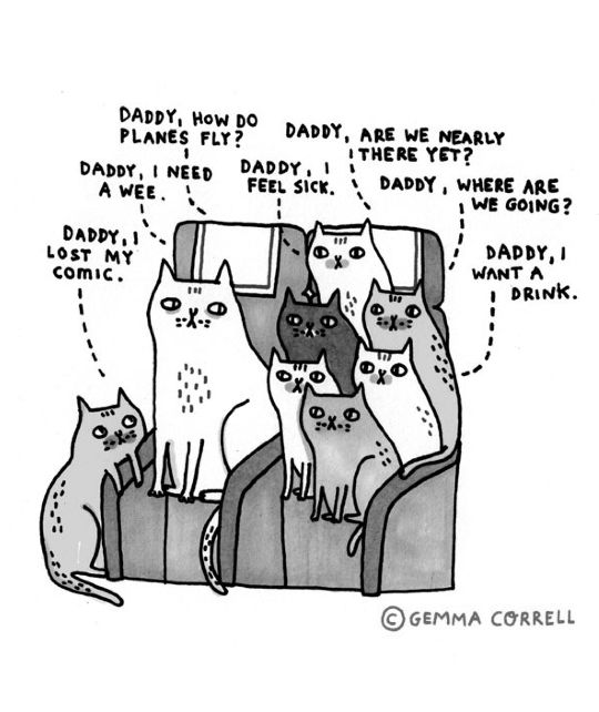 Gemma Correll A familiar scene if you are a cat parent  (dog parents included )