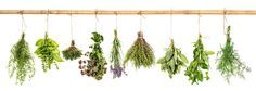Learn how medicinal herbs can be used for migraine relief. A migraine is not just a headache, it's a serious debilitating neurological electrical storm.