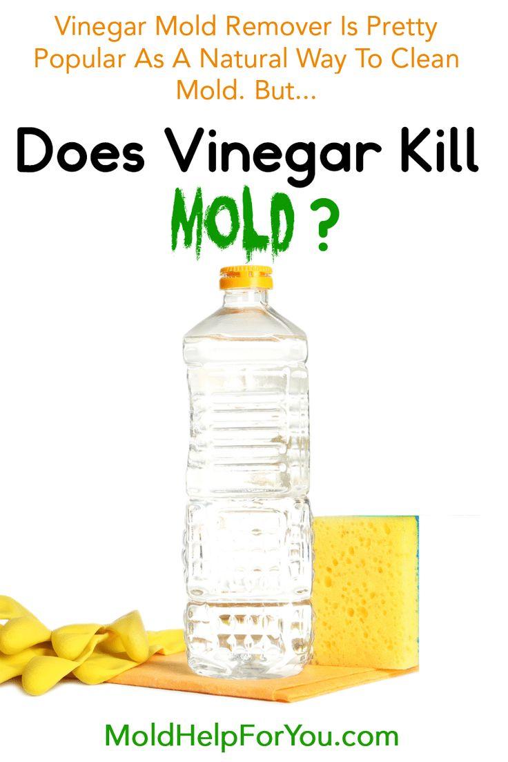 Does Vinegar Kill Mold? Mold remover, Vinegar cleaning