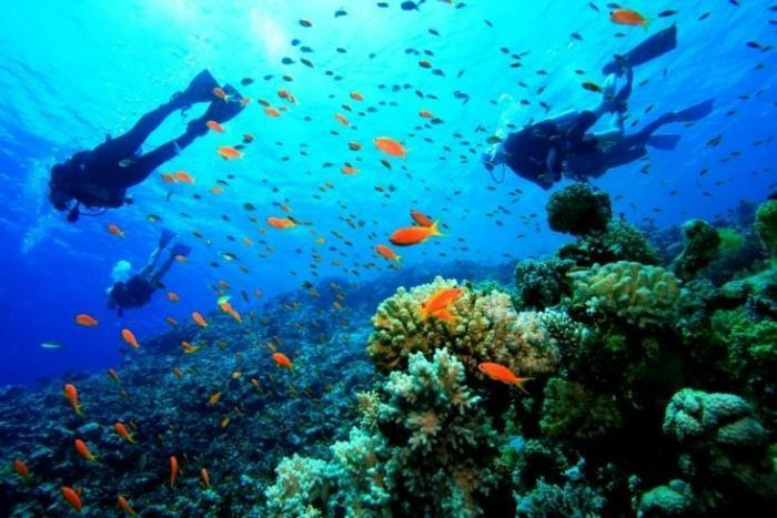Havelock Island is very famous for the wonderful blue beaches . You can engaged in activities like snorkeling, scuba diving etc. here
