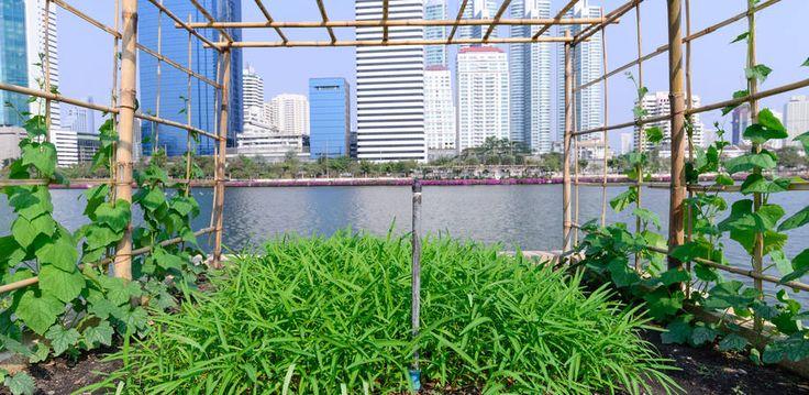 Urbant landbruk som miljøtiltak i byplanlegging blir et av temaene på konferansen.