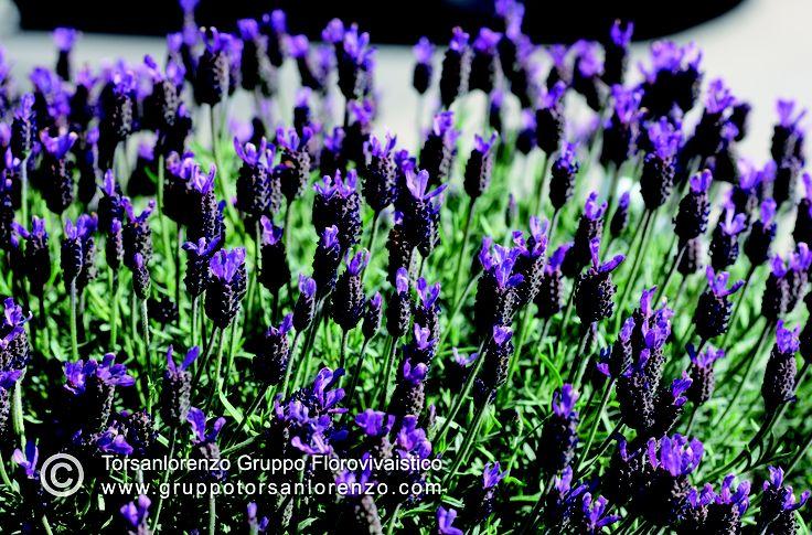 #flower #beauty #lovely #plants #nurseries #pépinière
