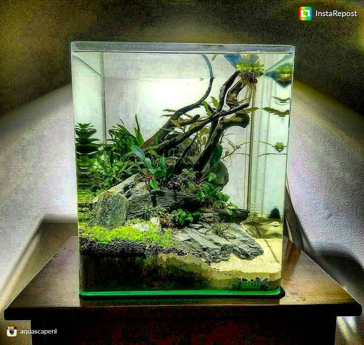 Attractive Aquarium Aquascape, Glass Aquarium, Aquarium Ideas, Aquarium Fish,  Aquascaping, Freshwater Aquarium, Nano Tank, Amphibians, Reptiles