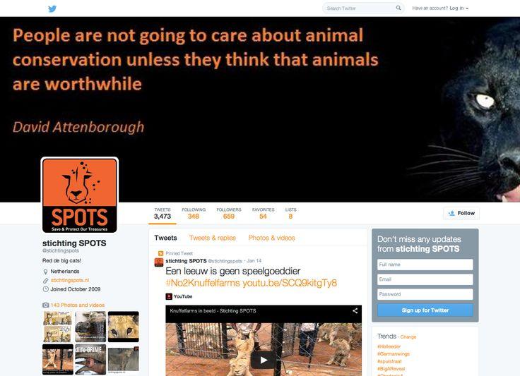 Via Twitter kun je ook heel gemakkelijk op de hoogte blijven van alles wat met de Big Cats en de projecten van Stichting SPOTS te maken heeft. Tweet je mee? #stichtingspots #knuffelfarms