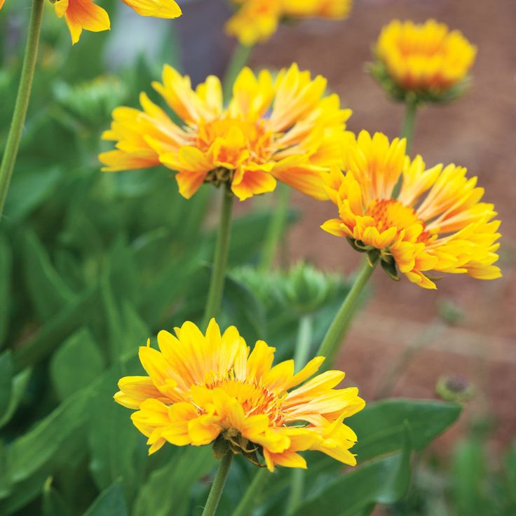 ~ 20 Favorite Perennials ~ These unfussy, long-lived plants pump out beautiful foliage and flowers year after year. Plant in fall or spring when cooler temperatures help them get a healthy start.