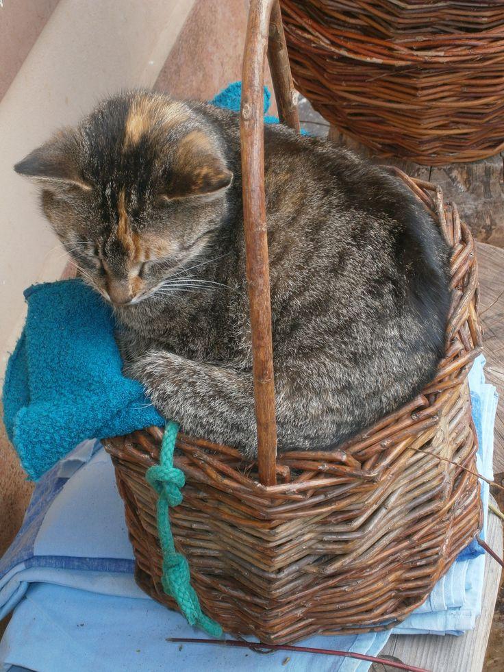 Není nad pohodlný pelíšek.