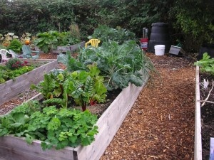 School Garden Ideas nutrition in the garden gardening for health nutrition facts fruits and vegetables school gardens research at texas am gardening ideas 490 Best School Garden Outdoor Classroom Lessons Ideas Images On Pinterest