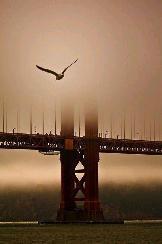 Delightfully Manic — kenzotrufi: Golden Gate.