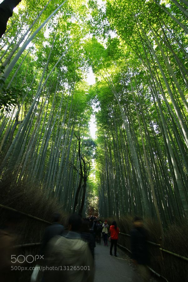京都竹林の道 #PatrickBorgenMD