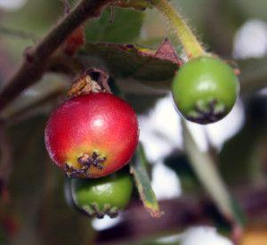12 Best Plants Images On Pinterest Gardening Tips