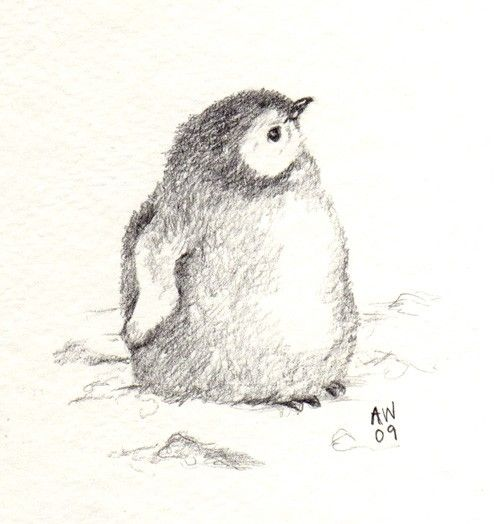 Penguin chick original pencil sketch by wildsunart on etsy