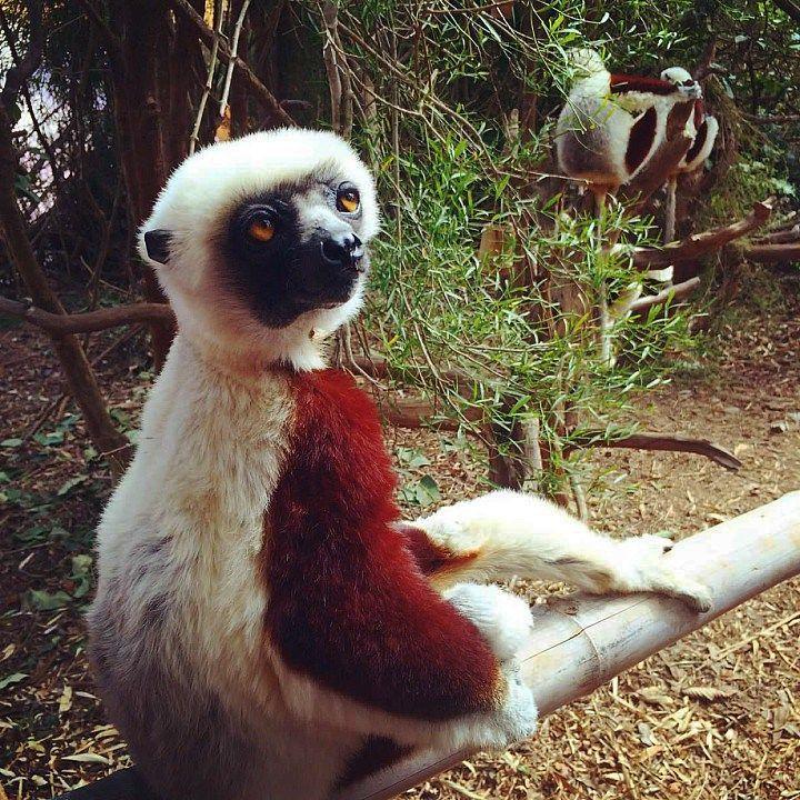 Lemur's Park | Antananarivo | Madagascar