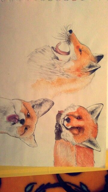 Old draws of foxes made with water colors