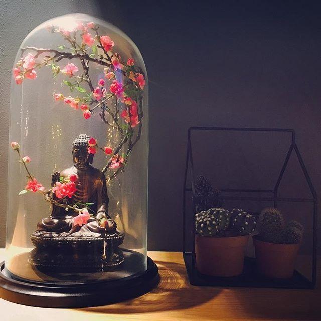 【linayankova】さんのInstagramをピンしています。 《Liefde voor deze #stolp met #boeddha en #kersenbloesem  #cherryblossoms #buddha #glassbell #cactus ❤️ #interiordesign #interior #decoration》