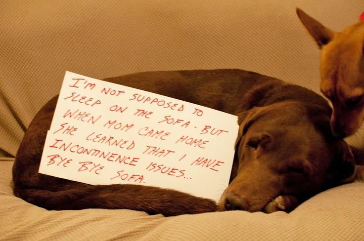 Pin by Dog Shame on Dog Shame Pinterest