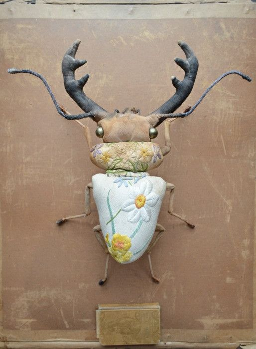 Stag beetle yellow flowers