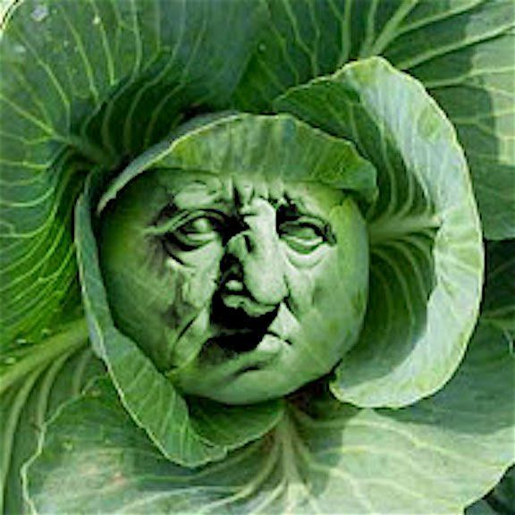 In Praise of Cabbage! by Cato the Elder