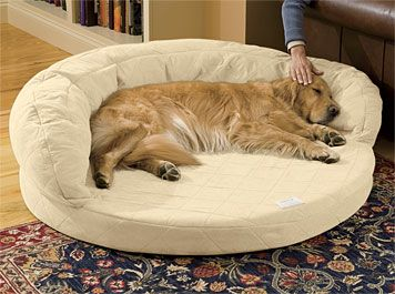 Just found this Orthopedic Dog Beds - Super-Absorbent Bolster Bed with Memory Foam -- Orvis on Orvis.com!