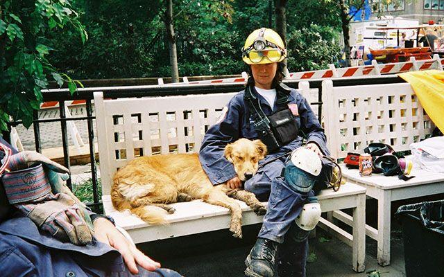 9.11同時多発テロで活躍した最後の救助犬が天国へ 「お疲れ様でした」と感謝の声 – grape [グレイプ] – 心に響く動画メディア