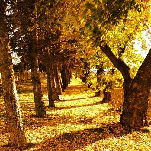 fall foliage, Edmonton AB