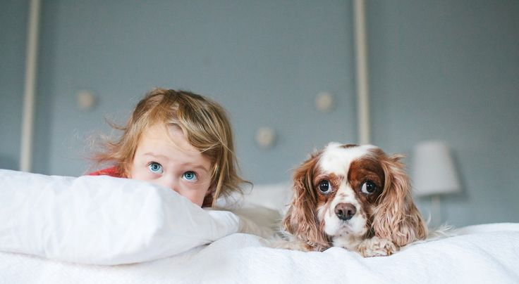 Wie sehen Hunde Kinder – und was bedeutet Kindern ein Hund?