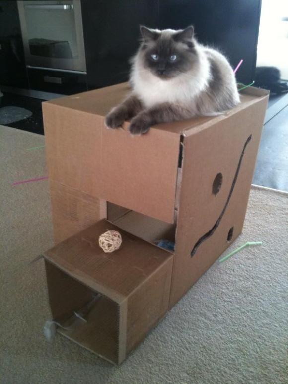 Superbe DIY Cat Toy Cardboard Box