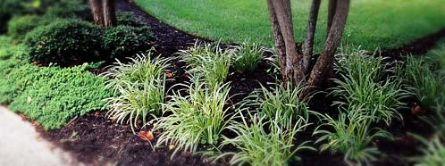 Monkey Grass Landscaping Landscaping Around Trees