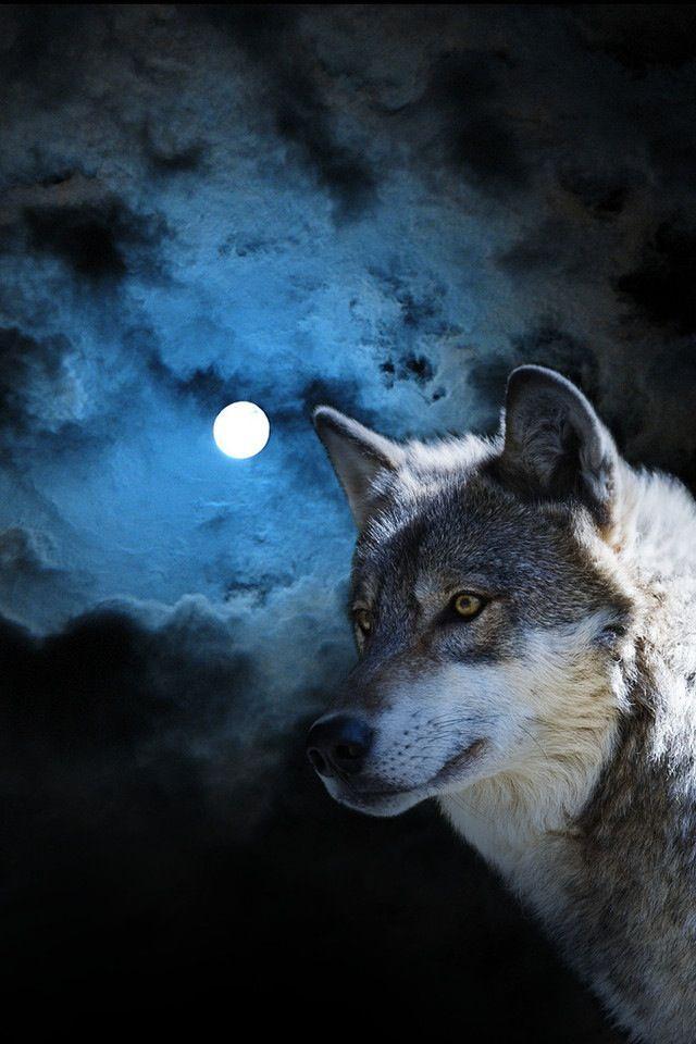 I love Wolves ╔══╗ ╚╗╔╝ ╔╝(¯`v´¯) ╚══`.¸.Wolves
