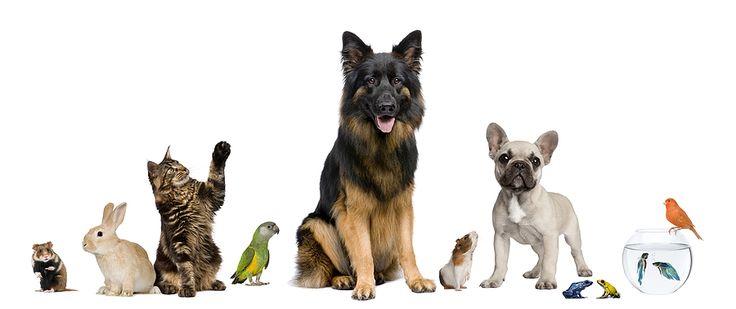 All Pets Together Projecten om te proberen Pinterest