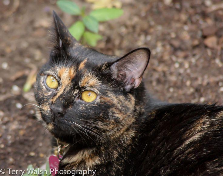 Tortoise Shell Cat in a garden. | my tortie is the best ...