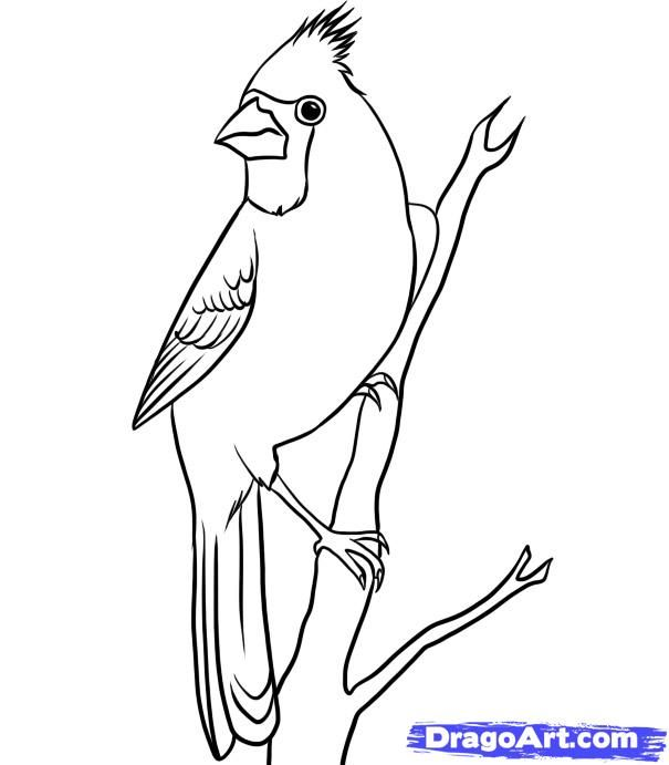 How To Draw A Cardinal Step By Step Birds Animals FREE Online Drawing Tutorial Added By ...