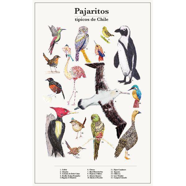 Poster Chilean Birds Illustration de IsabelCerda en Etsy