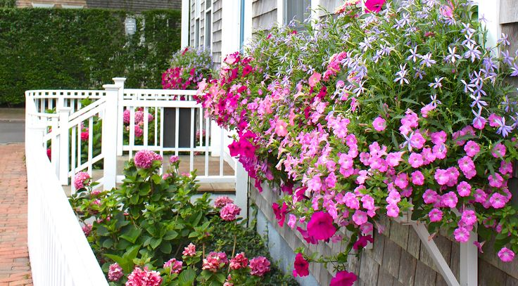 The window boxes of Nantucket are so gorgeous and so inspiring every summer! These mini gardens are truly works of art.