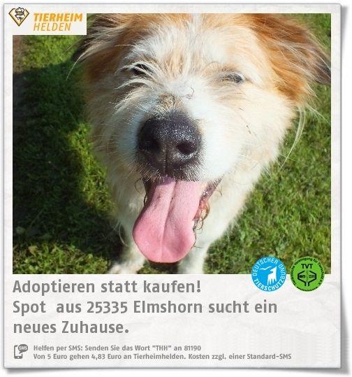 Spot ist ein Fundhund aus dem Tierheim Elmshorn und eher für Hundeerfahrene geeignet.  http://www.tierheimhelden.de/hund/tierheim-elmshorn/mischling/spot_/8276-0/  Spot ist freundlich und temperamentvoll, aber auch dickköpfig. Bei Artgenossen entscheidet die Sympathie und auch an der Leinenrührigkeit muss noch gearbeitet werden. Ein Haus mit Hof/Garten und wäre ideal. Kinder sollten etwas älter sein.
